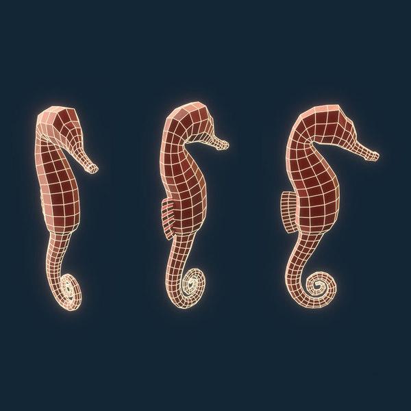 seahorse model
