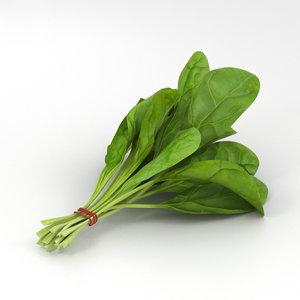 spinach food 3D
