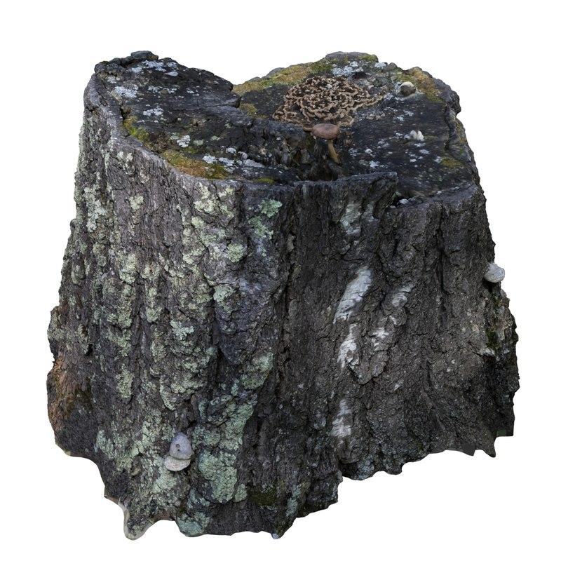3D model scan stump