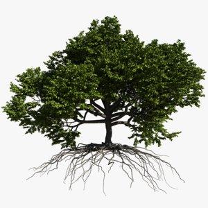 3D oak summer 2 tree model