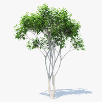 3D silk orange tree 01 model