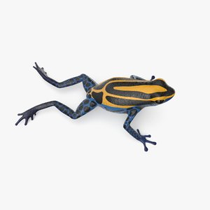 dyeing poison dart frog 3D model