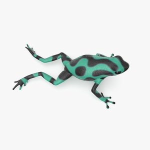 green poison dart frog 3D model