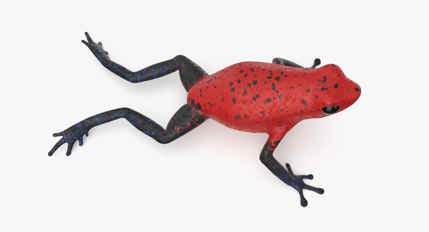 strawberry poison dart frog 3D model