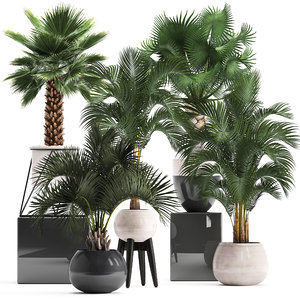 decorative palm trees model