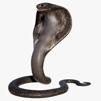 3d hd king cobra snake model
