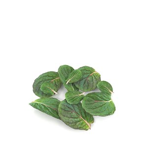 3D lemon mint leaf plant model
