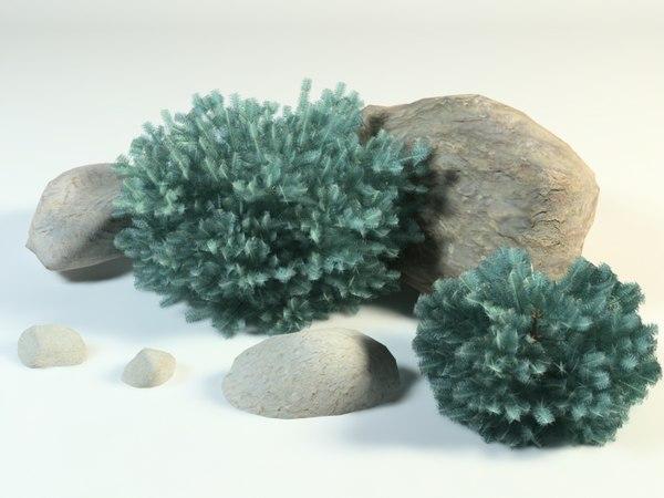 3D model blue spruce