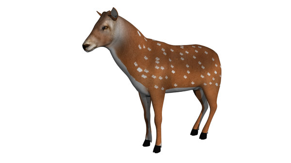 rigged deer animations model