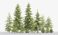 forest spruce trees 3D model