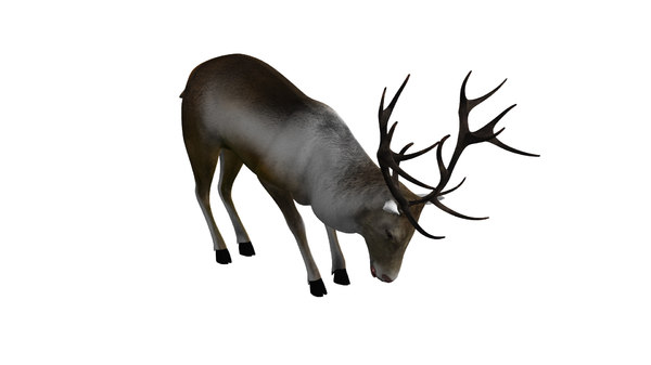 rigged reindeer animations 3D model