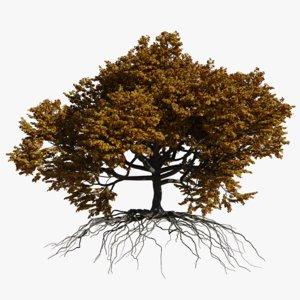 3D oak autumn 2 tree