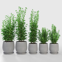 3D kitchen plant campana grey