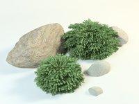 picea abies nidiformis spruce 3D