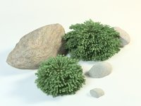 European spruce picea abies nidiformis