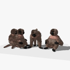3D baboons grooming animations groups model