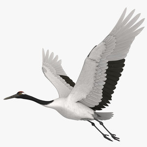 3D rigged red-crowned crane