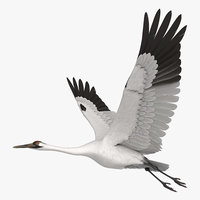 rigged whooping crane 3D model