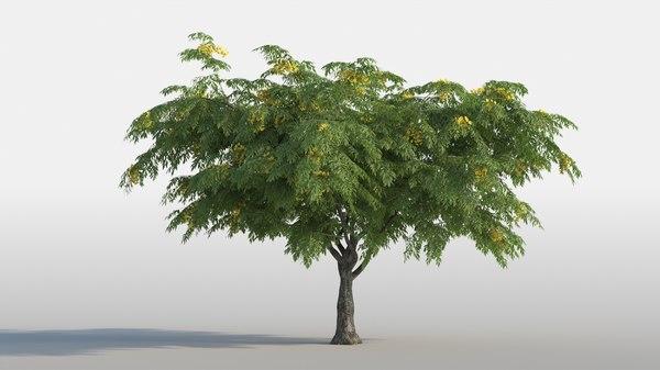 3D plant tree flowers cassia