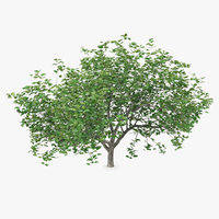 3D small evergreen tree green