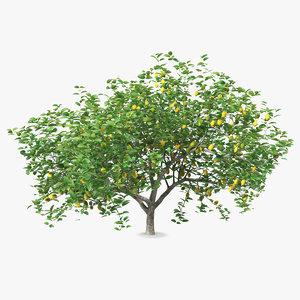 3D lemon tree
