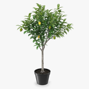 potted lemon tree 3D model