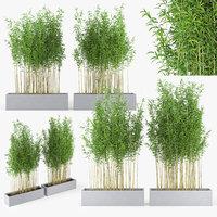 bambus muriel 3D model