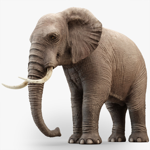 elephant rigging animation 3D model
