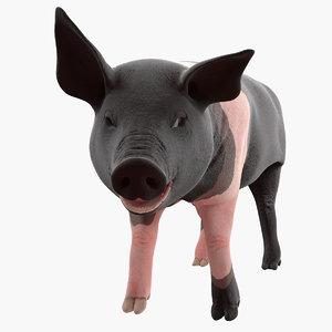 hampshire pig piglet rigged 3D model