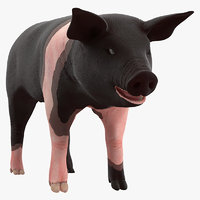 hampshire pig piglet rigged model