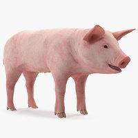 pig piglet landrace rigged model