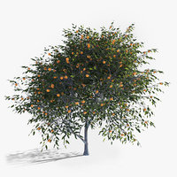 3D model realistic fruit tree mandarine