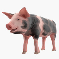 3D model pig piglet pietrain animal