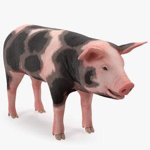 pig piglet pietrain rigged 3D