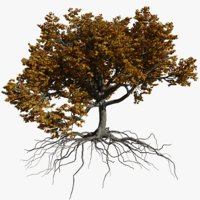 3D oak autumn 3 tree