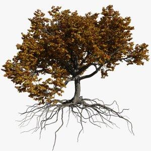 3D oak autumn 3 tree