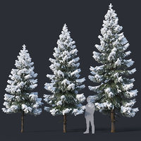 Spruce # 4 Three sizes H4,3-6,5m. Modular branches