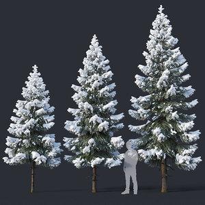 fir trees 4 3-6 3D