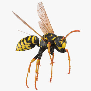 paper wasp rigged 3D model