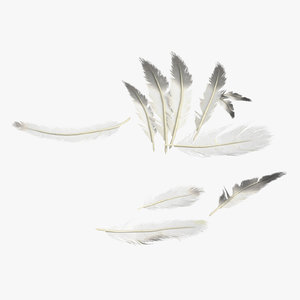 3D model scattered feathers small
