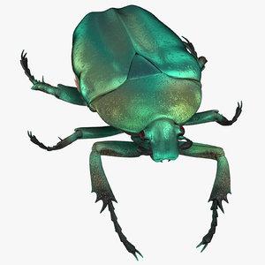green scarab beetle walking 3D model