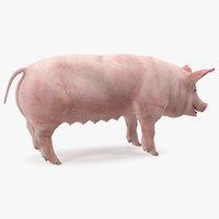 pig sow landrace rigged model