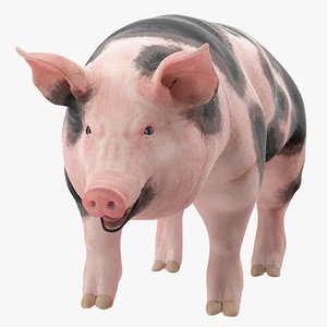 pig sow peitrain rigged 3D