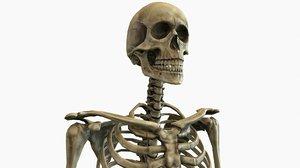 3D anatomical human skeleton