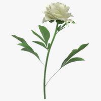 3D peony white -
