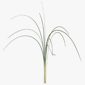 3D xerophyllum tenax