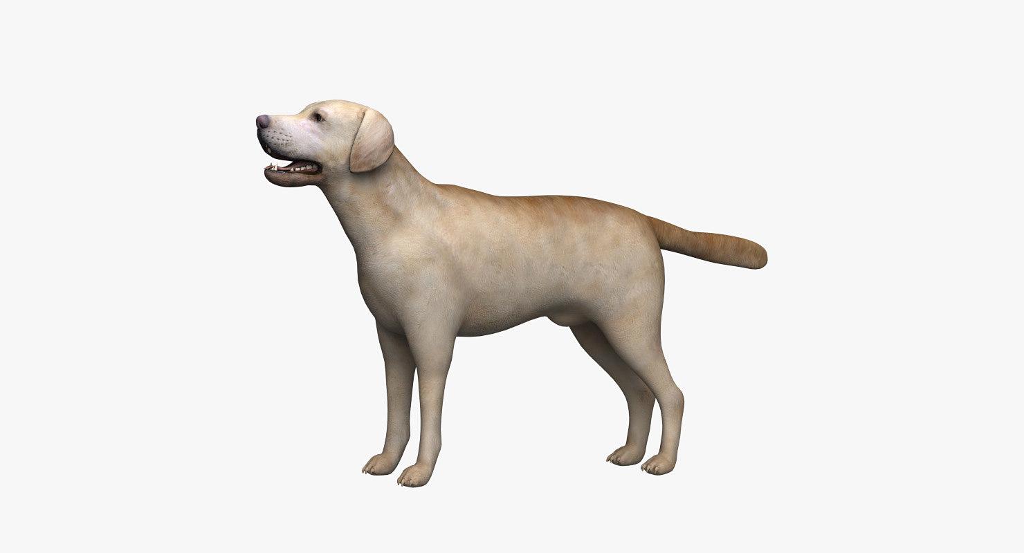 3d model labrador dog