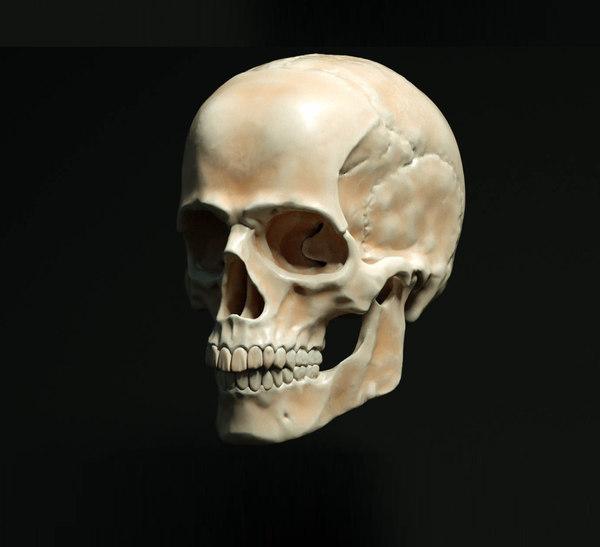 skkul head 3D model