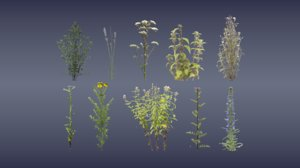 3D model wild flower planted naturally