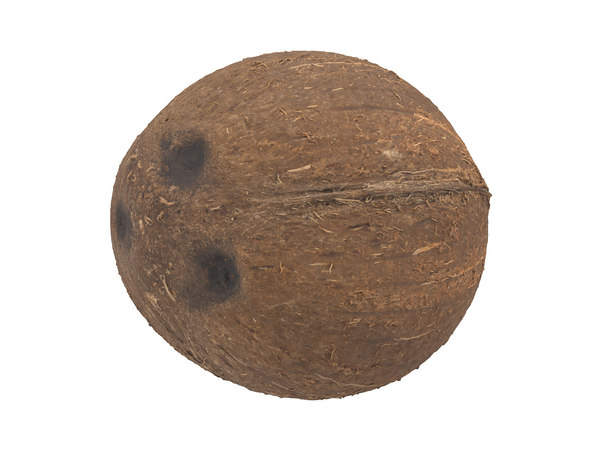 3D model photorealistic scanned coconut